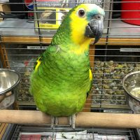 Different Amazon Parrot Pet Species