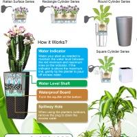 POTS (POTS WITH PLANTS) FOR SALE