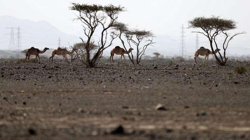 UAE to turn desert into rich farmland