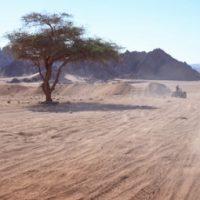 UAE Safari Club- Desert Safari Tours in Dubai